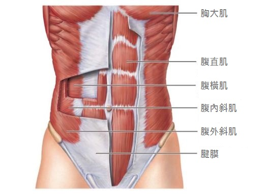 ab-muscle